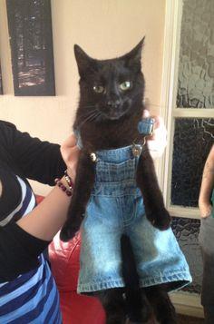 oh mom. black cat in overalls