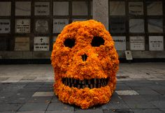 "A skull covered in marigolds rests in front of a wall of graves during preparations for a massive altar in the San Fernando Cemetery in Mexico City, Tuesday, Oct. 27, 2009. Workers added thousands of marigolds, known in Mexico as ""cempasuchil,"" to giant skull images Tuesday as they prepare to observe the of Day of the Dead. (AP Photo/Gregory Bull)"