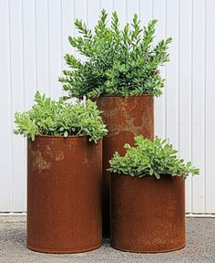 Large ft) corten steel planters for ferns and Saxifraga. Goes with metal of clay wall pot frame. Alternative to Long Tom pots.