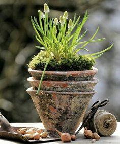 Love the multiple weathered terracotta pots and spring bulbs in the springtime sunshine. My Secret Garden, Vertical Herb Garden, Garden Bulbs, Herbs, Plants, Herb Garden, Garden Pots, Garden Containers, Spring Bulbs