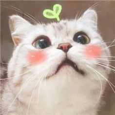Pin by Angelioforos Kolsis on 32 - Animal + Insect I Love Cats, Crazy Cats, Cute Cats, Funny Cats, Fluffy Animals, Cute Baby Animals, Neko, Kittens Cutest, Cats And Kittens