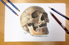 Skull color pencil drawing 2. by AtomiccircuS.deviantart.com on @deviantART