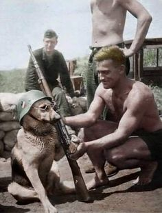 tiktok anime Dad: we are not getting a dog Dad aft - graduation Military Dogs, Military Humor, Military Art, Military History, German Soldiers Ww2, German Army, American Soldiers, Germany Ww2, War Dogs
