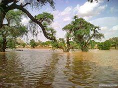 Al Rahad in autumn, Al Fashir  الرهد في الخريف، الفاشر  (By Himmat)   #sudan #alrahad #alfashir #fashir
