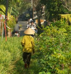 My Villas in Umalas Cherished Memories, Villas, Bali, Rice, Trees, Urban, Holiday, Pictures, Photos