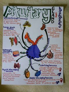 Pituitary Illustration