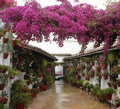 Festival Patios Cordobeses 2010 Patio Escañuela by Ildelop by www.jardinerosenaccion.es, via Flickr