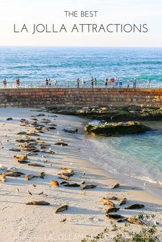 Learn what the best things to do in La Jolla are including multiple gorgeous beaches, museums and lots of wildlife.