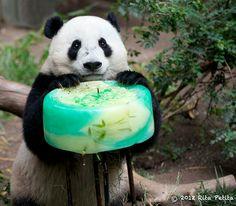 so cuuuuuuute ♥ #panda