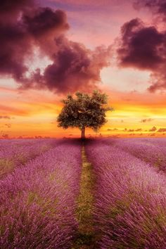 "heaven-ly-mind: "" Purple """
