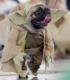 This is a pug dressed as Yoda. Your argument is invalid.