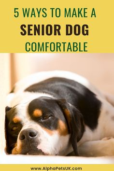 How to Make Sure Your Elderly Dog is Comfortable During his elderly years, your dog's needs will change a lot, and you will have to keep up with them. Here are some of the things that you will have to… More Living With Dogs, Short Dog, Interactive Dog Toys, Dog Pee, Dog Information, Orthopedic Dog Bed, Dog Activities, Pet Care Tips, Old Dogs