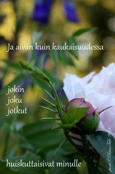 voimakortti Ja aivan kuin kaukaisuudessa Plants, Sari, Saree, Plant, Saris, Sari Dress, Planets