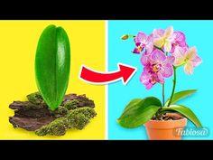 Métodos fáciles para la propagación de orquídeas: cómo cultivar orquídeas en casa - YouTube Orchid Propagation, Growing Orchids, Lifehacks, Flourish, Cactus Plants, Gardening Tips, Planting Flowers, Planters, Diy Projects