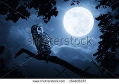 Night Owl Stock Photos, Royalty-Free Images & Vectors - Shutterstock