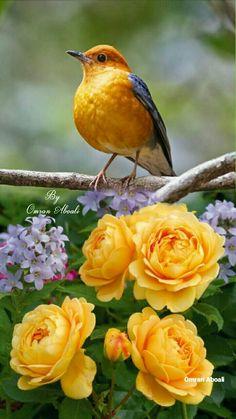 Colorful Bird Photography Orange 33 Ideas For 2019 Pretty Birds, Beautiful Birds, Animals Beautiful, Cute Animals, Beautiful Butterflies, Tropical Birds, Exotic Birds, Colorful Birds, Vogel Gif
