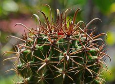 #Succulent #Cactus #minigarden #Succulentlovers #Cactuslovers