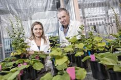 'Magic' plant discovery could lead to growing food in space: Scientists have discovered gene that will open the door for space-based food production -- ScienceDaily