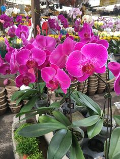 Orchid forever beautiful