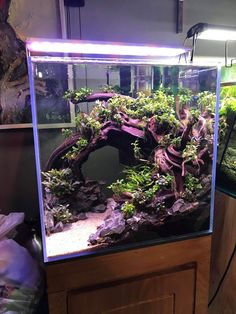 Betta Aquarium, Aquarium Setup, Aquarium Aquascape, Aquarium Design, Planted Aquarium, Aquarium Landscape, Betta Fish Tank, Aquascaping, Fish Tank Design