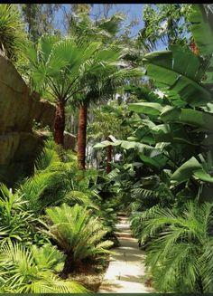 Subtropical garden implemented by Jardim Vista in Costa del Sol, Spain. Creative Landscape, Landscape Design, Garden Maintenance, Mediterranean Garden, Landscaping Company, Algarve, Building Design, Fields, Parks