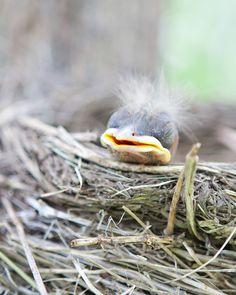 Baby bird sleeping in the nest.