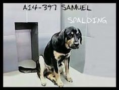 Georgia - Please Educate on Spay/Neuter - Please Foster/Sponsor to Help Save a Life