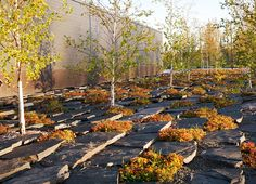 Warroad-Coen_partners-13 « Landscape Architecture Works | Landezine