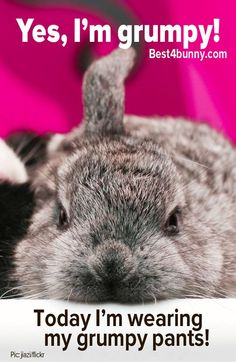 Do you have your grumpy pants on today? www.best4bunny.com