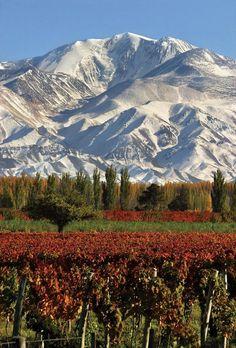 Mendoza. Argentina, Tierra de montañas y buen vino.