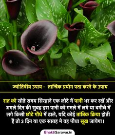 Gernal Knowledge, General Knowledge Facts, Knowledge Quotes, Vedic Mantras, Hindu Mantras, Natural Health Tips, Good Health Tips, Hinduism Quotes, Interesting Facts In Hindi