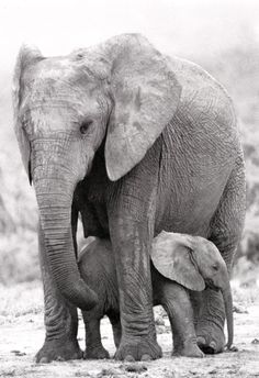 Mother and Baby Elephant, Elephants, African Wildlife, Mother Nature