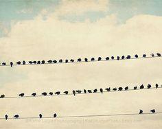 """Birds on a Wire"" - fine art photo on sale now!"