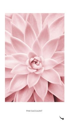 Pink Succulent by Sisi and Seb | Poster | artboxONE #sukkulente #rose #pastel