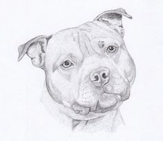 Staffordshire Bull Terrier Greeting Cards - Gift Set of Eight - Free Shipping US - Original Pencil Art Design - Desert Impressions on Etsy, $12.95