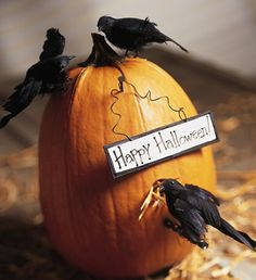 I think I'll do this. I already have the crows and I love that they are eating from it.
