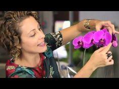 Ganhei uma orquídea, e agora? Primeiros passos - YouTube