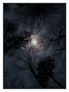 Night Sky by Dan McCarthy
