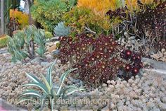 Graptopetalum, agave, and aeonium in a garden in San Diego, designed by Michael Buckner of The Plant Man nursery.