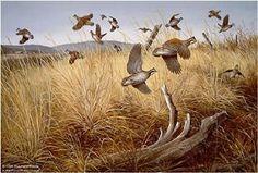 Maynard Reece Quail Ridge Bobwhites Quail Hunting, Pheasant Hunting, Hunting Dogs, Deer Hunting, Hunting Painting, Hunting Art, Hunting Stuff, Wildlife Paintings, Wildlife Art