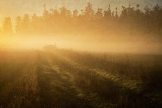 Golden Fog by Mary Lee Dereske. Fog covers a field in northwestern #Washington as the sun rises and turns it gold. Shop maryleephoto.com for fine art prints (framed, metal, canvas, and wood), greeting cards, and more. #fineart #homedecor #gifts