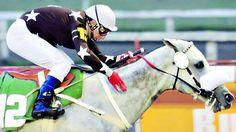 Uno de los mejores caballos de carreras , aristocity.