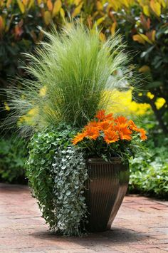 Container Gardening Ideas Orange Surprise, by Ball Horticultural Container Size: 14 inches, Exposure: Sun New Day™ Clear Orange gazania Emerald Falls dichondra Silver Falls™ dichondra Pony Tails Mexican feather grass Fall Planters, Garden Planters, Flower Planters, Balcony Garden, Large Garden Pots, Container Flowers, Container Plants, Container Size, Fall Container Gardening