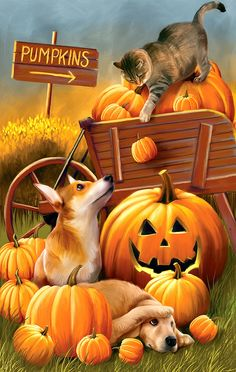 Look at this Evergreen Cat & Dog Pumpkin Patch Outdoor Flag on today! Retro Halloween, Chat Halloween, Halloween Pictures, Holidays Halloween, Snoopy Halloween, Halloween Cartoons, Halloween Clipart, Halloween Prints, Fall Garden Flag