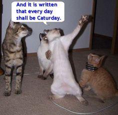 Vintage '06-'07 Cat Memes - Album on Imgur