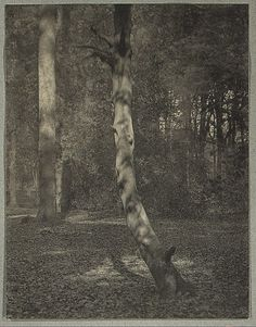 In Deerleap Woods - A Haunt of George Meredith  Frederick H. Evans  (English, London 1853–1943 London)  Date: 1909 Medium: Platinum print. Evans was attracted to two subjects difficult to treat in a highly personal manner: simple landscape and cathedral architecture. Both motifs had become banal in the works of commercial photographers of the late nineteenth century, and Evans gave them a new life.
