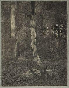 In Deerleap Woods - A Haunt of George Meredith - Frederick H. Evans (1909)