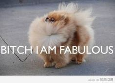 I miss having Poms!