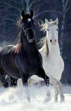 Beautiful Horse Pictures, Beautiful Arabian Horses, Most Beautiful Horses, Majestic Horse, Majestic Animals, Animals Beautiful, Black Arabian Horse, Beautiful Images, Horses In Snow