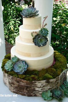wedding cakes with real succulents - Google Search